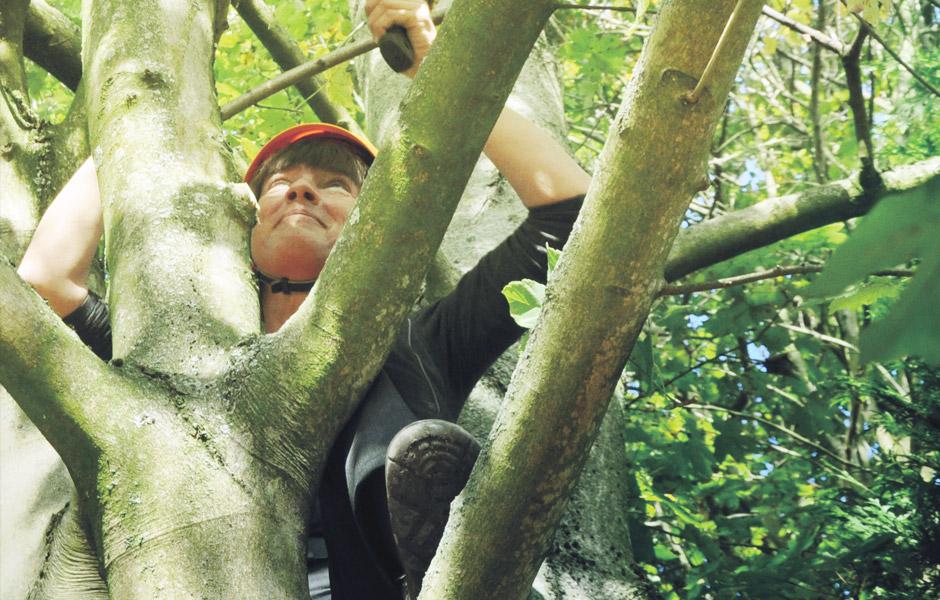 Baumpflege Felix Muller Garten Landschaftsbau